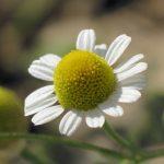 Plantele vederii
